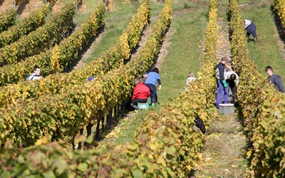 Bingen and the wine